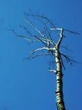 Νεκρό δέντρο Στοκ φωτογραφία με δικαίωμα ελεύθερης χρήσης