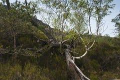Νεκρό δέντρο Στοκ εικόνα με δικαίωμα ελεύθερης χρήσης