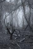 Νεκρό δασικό τοπίο απόκοσμων τρομακτικών αποκριών με το ομιχλώδες backgrou Στοκ φωτογραφία με δικαίωμα ελεύθερης χρήσης