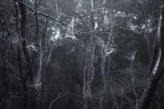 Νεκρό δασικό τοπίο απόκοσμων τρομακτικών αποκριών με το ομιχλώδες backgrou Στοκ Φωτογραφίες