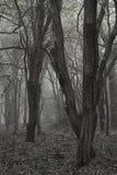 Νεκρό δασικό τοπίο απόκοσμων τρομακτικών αποκριών με το ομιχλώδες backgrou Στοκ Φωτογραφία
