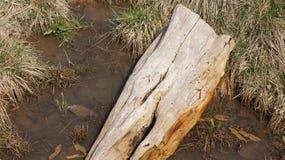 νεκρό δάσος 2 Στοκ φωτογραφία με δικαίωμα ελεύθερης χρήσης