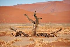 νεκρό δέντρο ερήμων Στοκ Φωτογραφίες