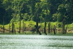 νεκρό δέντρο κολοβωμάτων στοκ εικόνες με δικαίωμα ελεύθερης χρήσης
