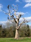 Νεκρό δέντρο, κτήμα σπιτιών Chorleywood στοκ εικόνες