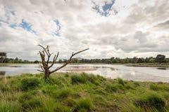 Νεκρό δέντρο με τους ανώμαλους κλάδους στην άκρη μιας λίμνης στοκ φωτογραφία