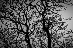 Νεκρό δέντρο σκιαγραφιών στο σκοτεινό δραματικό υπόβαθρο ουρανού για τρομακτικό ή το θάνατο Νύχτα αποκριών Μάταιος, απελπισία, λυ στοκ εικόνα με δικαίωμα ελεύθερης χρήσης