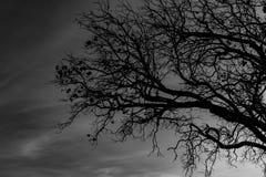 Νεκρό δέντρο σκιαγραφιών στο σκοτεινό δραματικό υπόβαθρο ουρανού για τρομακτικό ή το θάνατο Νύχτα αποκριών Μάταιος, απελπισία, λυ στοκ εικόνες