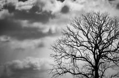 Νεκρό δέντρο σκιαγραφιών στο σκοτεινό δραματικό υπόβαθρο ουρανού για τρομακτικό ή το θάνατο Νύχτα αποκριών Μάταιος, απελπισία, λυ στοκ φωτογραφίες