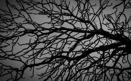 Νεκρό δέντρο σκιαγραφιών στο σκοτεινό δραματικό υπόβαθρο ουρανού για τρομακτικό ή το θάνατο Νύχτα αποκριών Μάταιος, απελπισία, λυ στοκ φωτογραφίες με δικαίωμα ελεύθερης χρήσης
