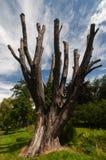 Νεκρό δέντρο στα πολύβλαστα περίχωρα Στοκ εικόνα με δικαίωμα ελεύθερης χρήσης