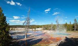 Νεκρό δέντρο στην άνοιξη Firehole στο Drive λιμνών Firehole στο εθνικό πάρκο Yellowstone στο Ουαϊόμινγκ ΗΠΑ στοκ εικόνες