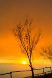 Νεκρό δέντρο στο ηλιοβασίλεμα Στοκ Φωτογραφία