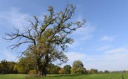 Νεκρό δέντρο στο λιβάδι το πρόωρο φθινόπωρο Στοκ εικόνα με δικαίωμα ελεύθερης χρήσης