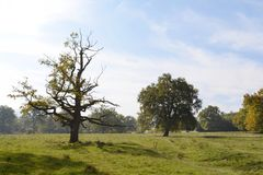 Νεκρό δέντρο στο λιβάδι το πρόωρο φθινόπωρο Στοκ Φωτογραφία