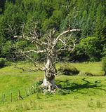 Νεκρό δέντρο, φωτεινό φως του ήλιου, μυστηριώδης σκιά στοκ φωτογραφίες με δικαίωμα ελεύθερης χρήσης