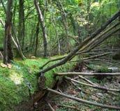 νεκρό δέντρο Στοκ φωτογραφίες με δικαίωμα ελεύθερης χρήσης