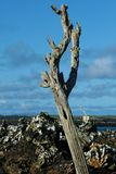 νεκρό δέντρο Στοκ Εικόνες