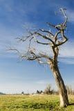 νεκρό δέντρο Στοκ εικόνες με δικαίωμα ελεύθερης χρήσης