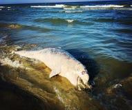 Νεκρό δελφίνι στοκ εικόνες με δικαίωμα ελεύθερης χρήσης