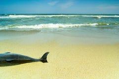 νεκρό δελφίνι Στοκ Εικόνες