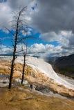 νεκρό καυτό μαμμούθ yellowstone εαρ&io Στοκ φωτογραφία με δικαίωμα ελεύθερης χρήσης