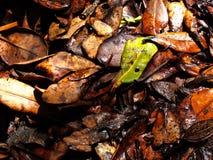 Νεκρό καφετί φύλλο σε ένα υγρό πάτωμα με ένα πράσινο υπόβαθρο φύλλων Στοκ Εικόνες