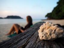 Νεκρό κοράλλι που σκαρφαλώνει σε ένα κούτσουρο driftwood Στοκ Εικόνα