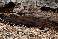 νεκρό κούτσουρο στοκ φωτογραφία με δικαίωμα ελεύθερης χρήσης