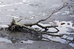 νεκρό κούτσουρο στοκ εικόνες με δικαίωμα ελεύθερης χρήσης