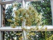νεκρό λουλούδι στοκ φωτογραφίες με δικαίωμα ελεύθερης χρήσης