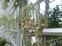 νεκρό λουλούδι Στοκ εικόνα με δικαίωμα ελεύθερης χρήσης