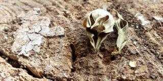 νεκρό λουλούδι Στοκ Εικόνες