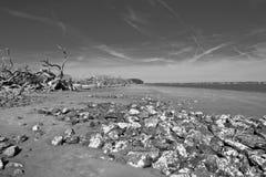 νεκρό παλαιό δέντρο Στοκ φωτογραφίες με δικαίωμα ελεύθερης χρήσης