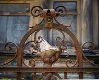 Νεκρό πουλί, τσίχλα στοκ φωτογραφία