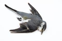 Νεκρό υπόβαθρο πουλιών στη φύση, απομονωμένο νεκρό πουλί στο λευκό Στοκ φωτογραφία με δικαίωμα ελεύθερης χρήσης
