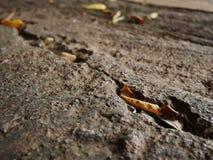 Νεκρό φύλλο στο πάτωμα Στοκ Εικόνα