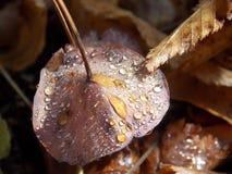 νεκρό φύλλο φθινοπώρου Στοκ φωτογραφίες με δικαίωμα ελεύθερης χρήσης