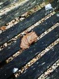 νεκρό φύλλο Στοκ Φωτογραφίες