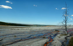 νεκρό geyser δέντρο απορροών στοκ φωτογραφίες