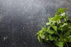 νεκρό nettle λευκό στοκ εικόνες με δικαίωμα ελεύθερης χρήσης