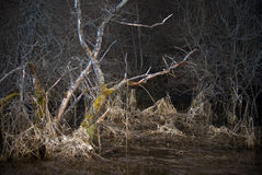 νεκρό scary δέντρο τοπίων Στοκ φωτογραφία με δικαίωμα ελεύθερης χρήσης