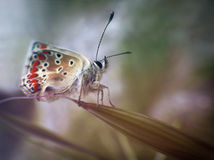 Νεογέννητη πεταλούδα Στοκ εικόνες με δικαίωμα ελεύθερης χρήσης