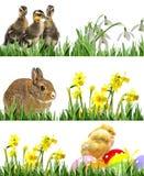 Νεογέννητοι κοτόπουλα, κουνέλι και νεοσσοί και αυγά Πάσχας Στοκ φωτογραφία με δικαίωμα ελεύθερης χρήσης