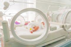 Νεογέννητος αθώος ύπνος μωρών σε έναν επωαστήρα στοκ εικόνα