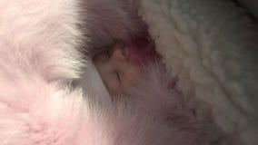 Νεογέννητος ύπνος κοριτσάκι στον περιπατητή το χειμώνα φιλμ μικρού μήκους