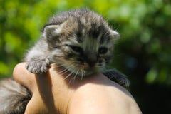 Νεογέννητο γατάκι στο ανθρώπινο χέρι Στοκ φωτογραφία με δικαίωμα ελεύθερης χρήσης