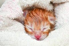 Νεογέννητο γατάκι Στοκ φωτογραφία με δικαίωμα ελεύθερης χρήσης