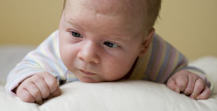 νεογέννητο πορτρέτο Στοκ Εικόνες