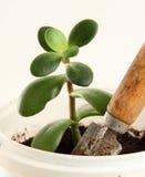 νεολαίες δοχείων πράσινων φυτών κήπων trowel Στοκ φωτογραφίες με δικαίωμα ελεύθερης χρήσης